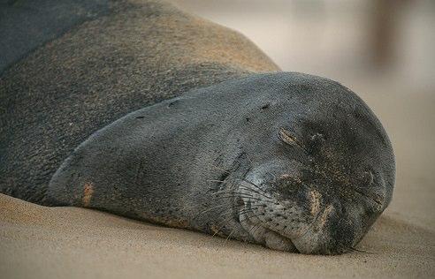Monk Seal Blame Game