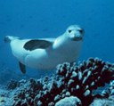 Monk Seals Should be Saved, Not Shot!