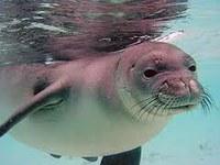 Save a beach, save a seal -- public hearings