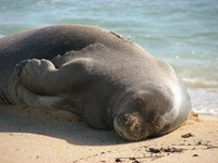 Why care about monk seals?