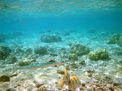 Kono Reef