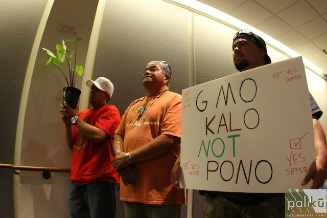 Uncle Jerry Konanui - Malama Haloa, no GMO Kalo!!