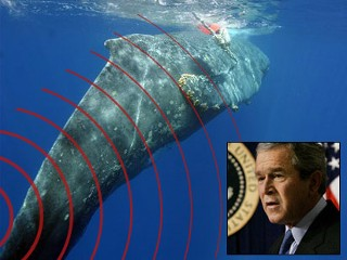bush no like whales.