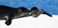 Monk seal habitat protection expansion hearings announced