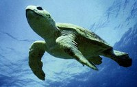 Victory for Sea Turtles
